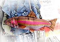 Rainbow_trout