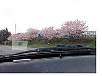 Sakura2014_2