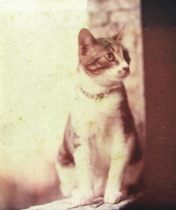 Cat-19778-sannta-4927